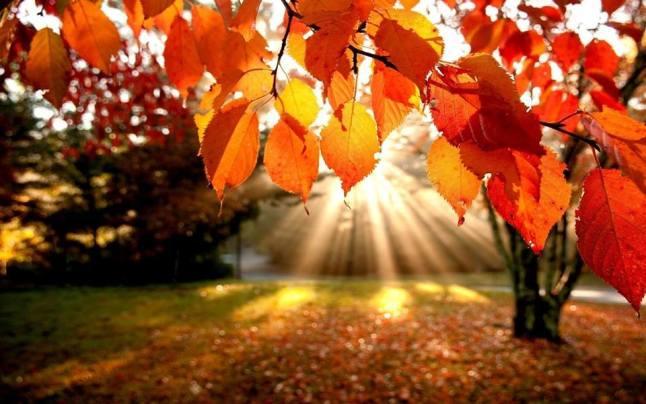 Questione d'autunno… e questione di forma!